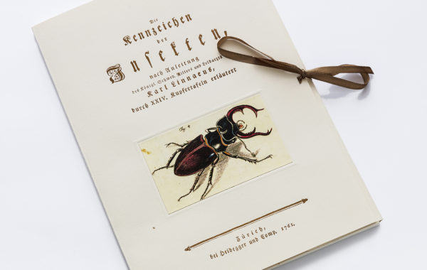 Die Kennzeichen der Insekten