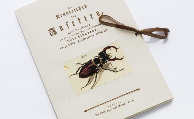 insekty01